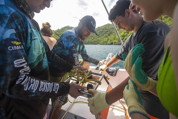 During a Discover Scuba Diving trip with ConnectOcean, new divers can do more than just try diving, and contribute to the research efforts out on the water. One example is assisting with the deployment of BRUVS, like above
